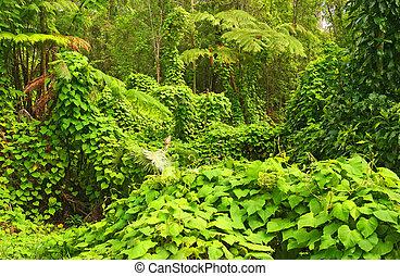 Jungle, Hawaii Volcanoes National Park, Big Island, Hawaii,...