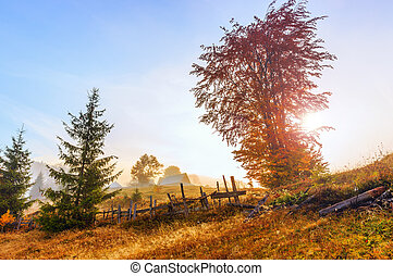 Magical sunrise with tree in Transylvania mountains