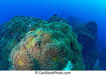 Beautiful Coral in Koh Tao, Thailand
