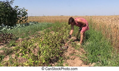 peasant harvest potato - Farmer woman harvest dig natural...