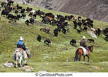 stockriders with flock in Alay mountains on pastureland -...