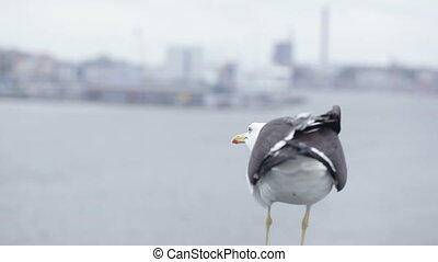 Seagull on city background - Against the background of...