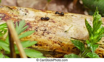 ants running along the trunk, filmed with slider
