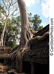 Ta Prohm in Angkor