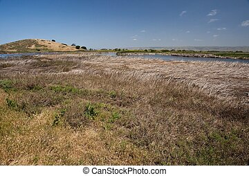 Coyote Hills Regional Park is a regional park administered...