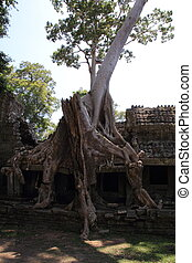 Preah Khan in Angkor