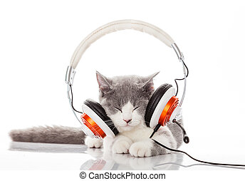 Cute kitten and headphones Young cat is listening to music...