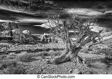 Dead Tree in Arches National Park - Old dead tree surrounded...