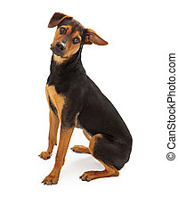 Cute Rescue Dog Mixed Breed - A cute mixed breed rescue dog...