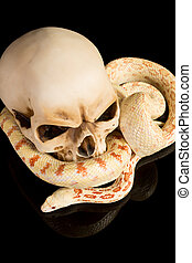 Haloween snake - Creepy image of a snake curling around a...