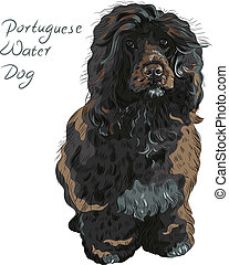 vector Portuguese Water Dog - Black curly dog breed...