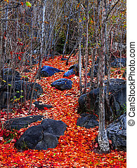 Colorful Leaves - Colorful leaves symbolizing the change...