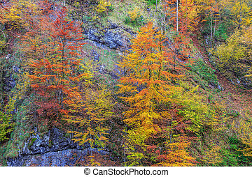 Autumn landscape in mountain Carpathian, Romania