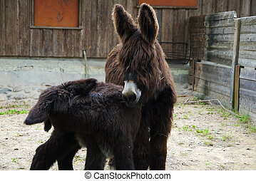 Two cute Donkeys