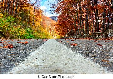road in autumn beech landscape