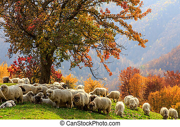 Autumn landscape, sheep, shepard dog - Tree, sheep, shepard...