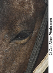 A closeup of a horse\'s eye