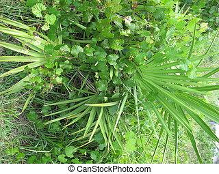 Palmetto Bush