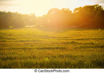 Sunset over rural grass field