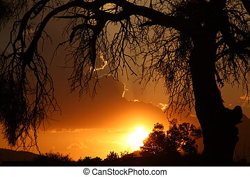 The Hanging Tree - Sunset in the west
