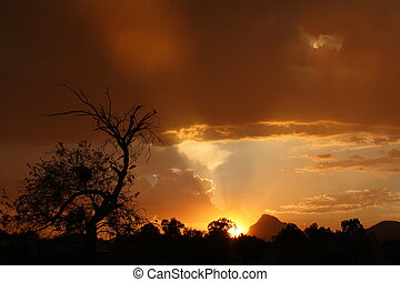 Sunset Tucson - Dark sky background with mesquite tree...