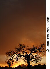 Mesquite tree night - Dark sky background with mesquite tree