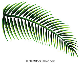 Palm leaves - Illustration of the palm leaves on a white...