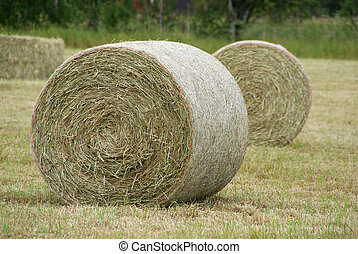 Round Hay Bales - Wrapped, round hay bales standing in the...