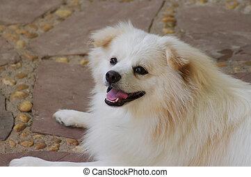 White dog smile  - White dog smile