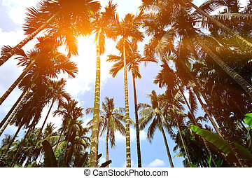 palm trees with fruits