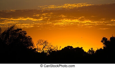 Sunset in pantanal - High contrast Sunset in Brazilian...