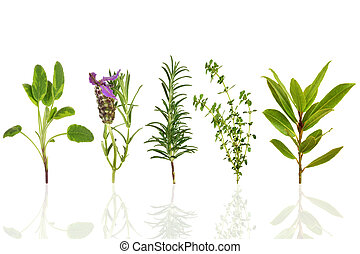 Herb Leaf Selection - Sage, lavender, rosemary, thyme and...