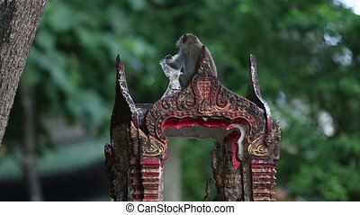 monkey eats rice on the temple in the evening