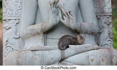 cat sitting on the statue of a Buddha in thay