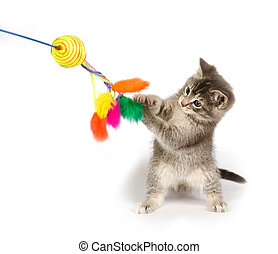 Gray kitten playing with toy - A gray kitten playing with a...