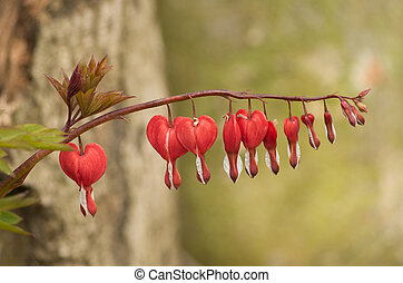 Heart flowers - line of heart flowers on a single branch