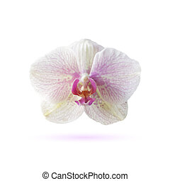 Orchid icon. Vector illustration