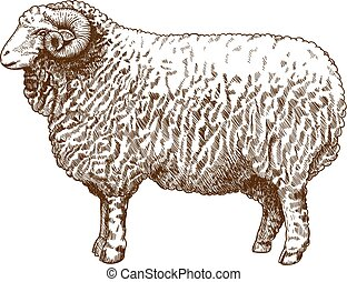illustration of engraving ram - vector illustration of...