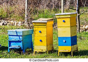 azul, amarillo, Colmenas, jardín