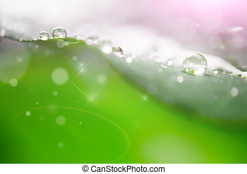 water drop on leaf - blur and soft focus of water drop on...