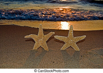 Beach Stars - Pair of starfish on the beach at sunset