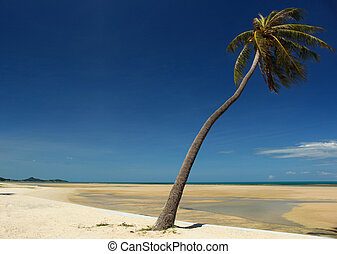 Koh Samui Plam Tree - A view off the south east coast of Koh...
