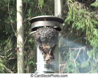 Wasp\'s Nest - Time-lapse Wasp\'s Nest burning
