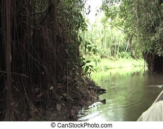 Paddling in the Amazon - Paddling a dugout canoe on the...