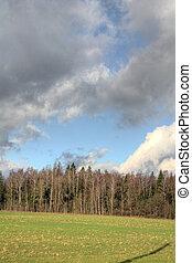 Cloud. Autumn forest.