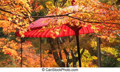 Red leaves of the maple in autumn for adv or others purpose...