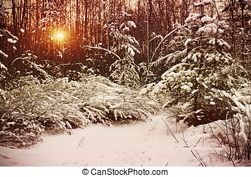 early morning in the winter forest