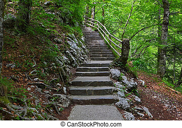 Escaleras, verde, bosque