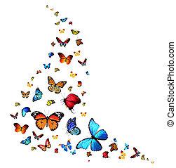 autunno, collezione, -, Farfalle
