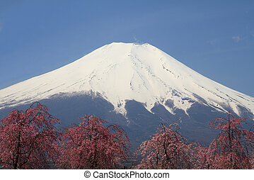 Mt Fuji and cherry blossoms
